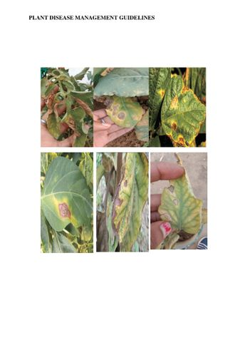 PLANT DISEASE MANAGEMENT GUIDELINES